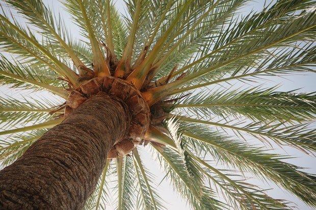 Sommer Palme Summer Stock