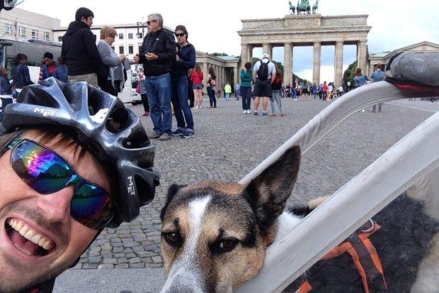 Sauerwein/Hund