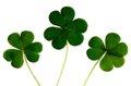 Klee Kleeblatt Irland Stock