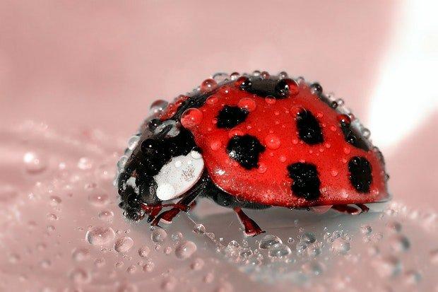 Marienkäfer Ladybug Stock