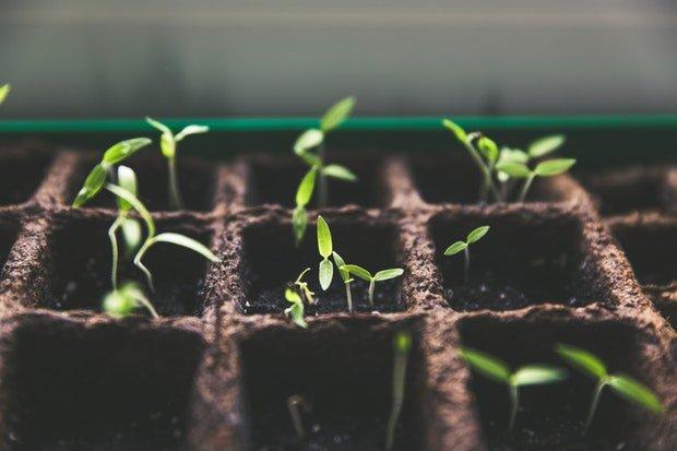Pflanzen Garten Stock