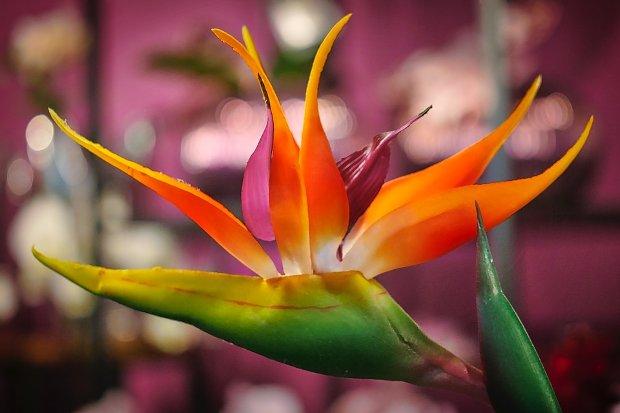 Pflanze Blume Tropen Stock