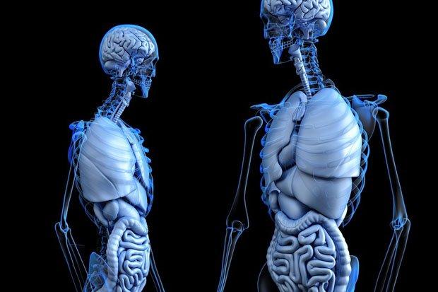Anatomie Skelett stock