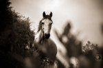 Pferd Reiten Stock