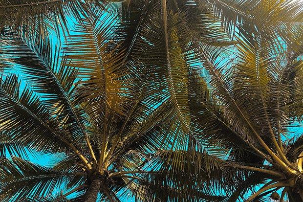 Palmen Stock