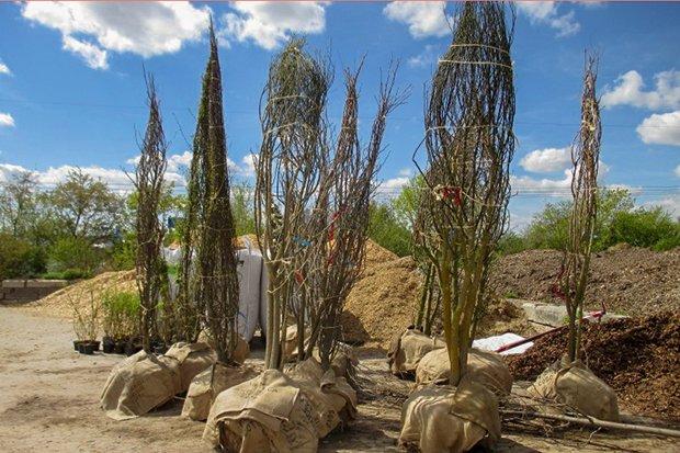 Baumspenden