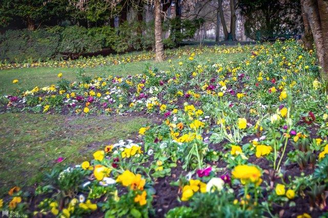 Blütenmeer im Klein-Nizza
