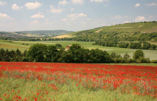 Landschaft bei Tauberrettersheim