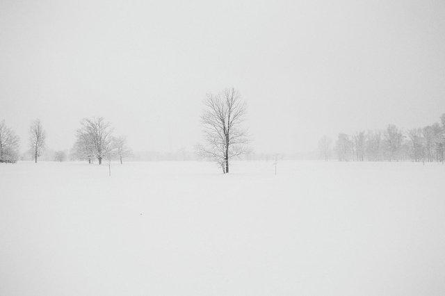 Schnee, Stock