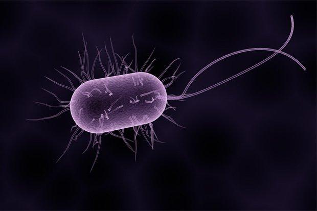 Bakterium Stock