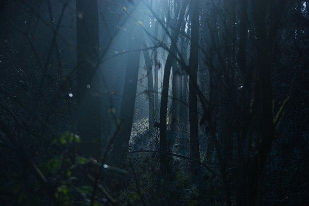 Horror Wald Stock