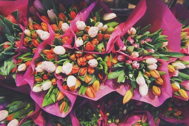 Frühling Tulpen Stock