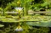 Botanischer Garten Stock