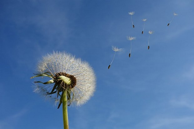 Pusteblume Natur Blume Pflanze Löwenzahn Wind Stock