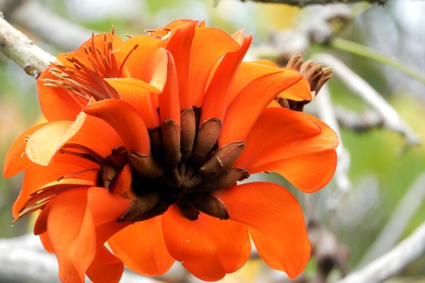Blumen Stock